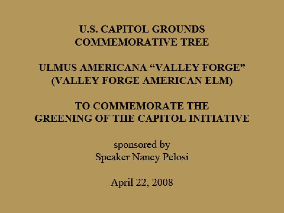 "U.S. Capitol Grounds Commemorative Tree  Ulmus americana ""Valley Forge"" (Valley Forge American Elm)  To Commemorate the Greening of the Capitol Initiative  sponsored by Speaker Nancy Pelosi  April 22, 2008"
