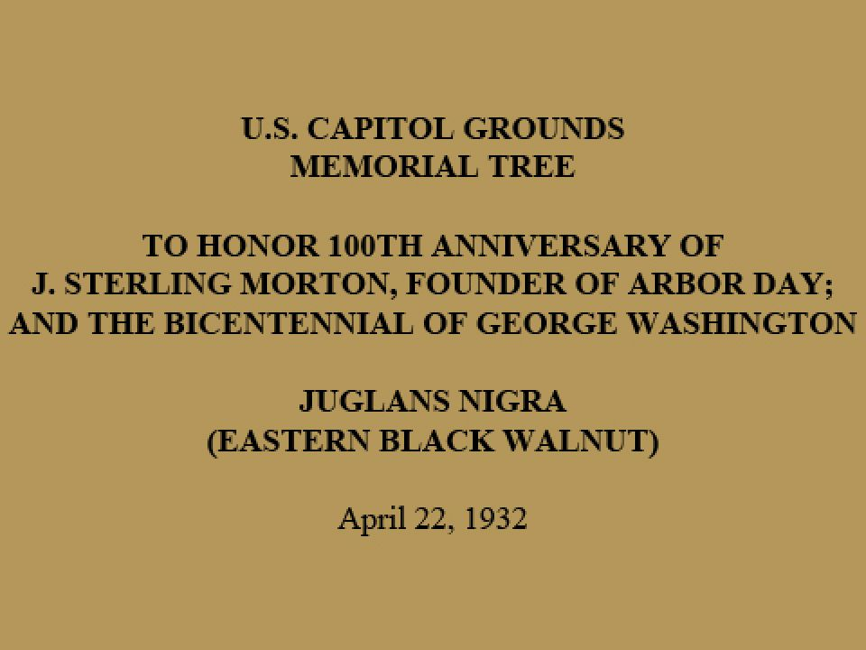U.S. Capitol Grounds Memorial Tree  To Honor 100th Anniversary of J. Sterling Morton, Founder of Arbor Day; And the Bicentennial of George Washington  Juglans Nigra (Eastern Black Walnut)  April 22, 1932