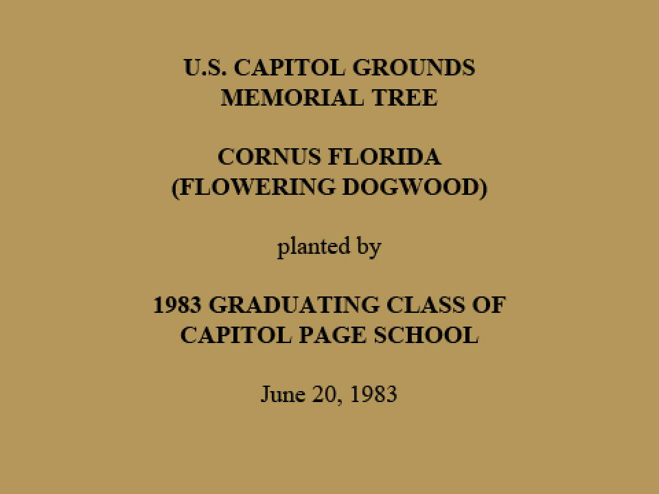 U.S. Capitol Grounds Memorial Tree  Cornus florida (Flowering Dogwood)  planted by  1983 Graduating Class of Capitol Page School  June 20, 1983