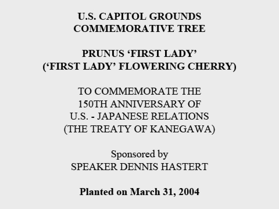 U.S. Capitol Grounds Commemorative Tree  Prunus 'first lady' ('First Lady' Flowering Cherry)  To Commemorate the 150th Anniversary of U.S. - Japanese Relations (The Treaty of Kanegawa)  Sponsored by Speaker Dennis Hastert  Planted on March 31, 2004