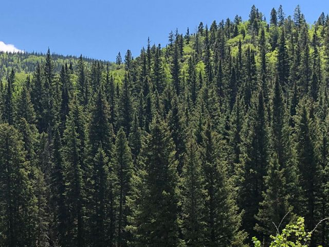 View of the Carson National Forest in New Mexico.