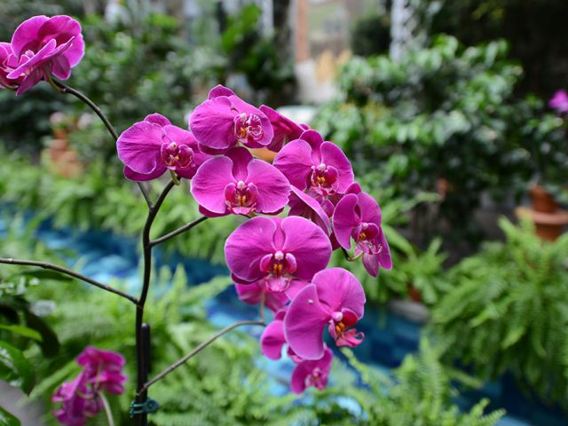 Orchid Show at the U.S. Botanic Garden.