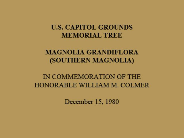 U.S. Capitol Grounds Memorial Tree  Magnolia grandiflora (Southern Magnolia)  In Commemoration of the Honorable William M. Colmer  December 15, 1980