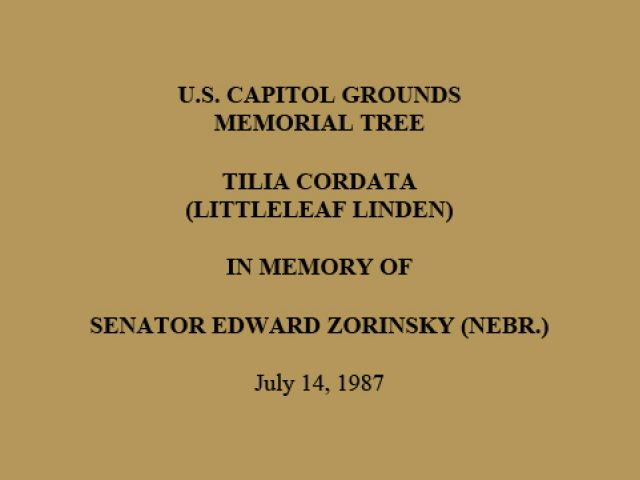 U.S. Capitol Grounds Memorial Tree  Tilia cordata (Littleleaf Linden)  In Memory of  Senator Edward Zorinsky (Nebr.)  July 14, 1987