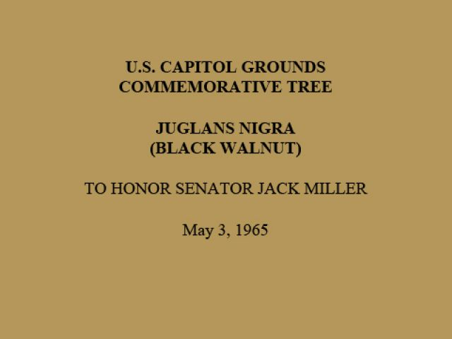 U.S. Capitol Grounds Commemorative Tree  Juglans nigra (Black Walnut)  To Honor Senator Jack Miller  May 3, 1965