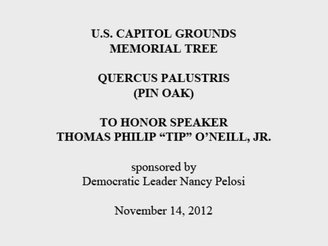 "U.S. Capitol Grounds Memorial Tree  Quercus palustris (Pin Oak)  To Honor Speaker Thomas Philip ""Tip"" O'Neill, Jr.  sponsored by Democratic Leader Nancy Pelosi  November 14, 2012"